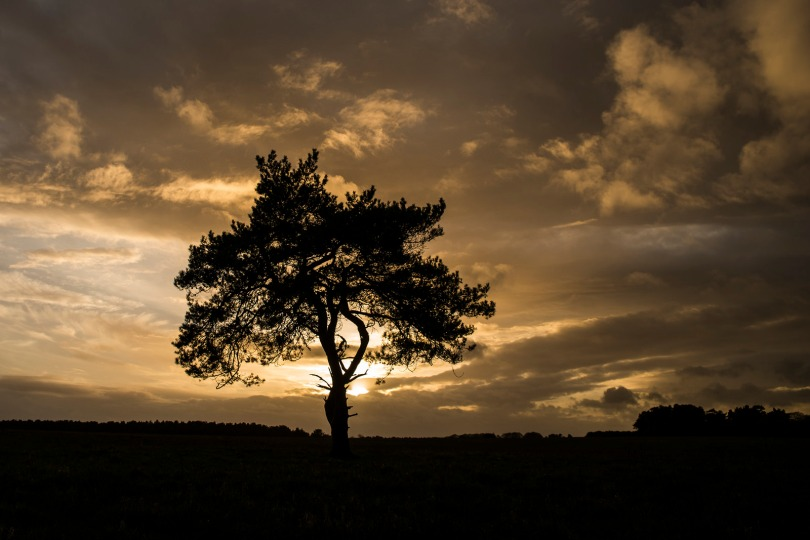 The Lone Tree, Low and Wide